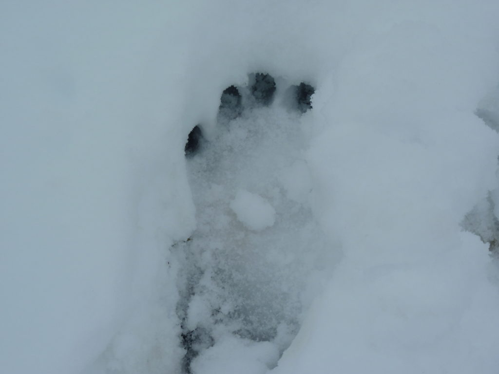 Yeti footprint photo