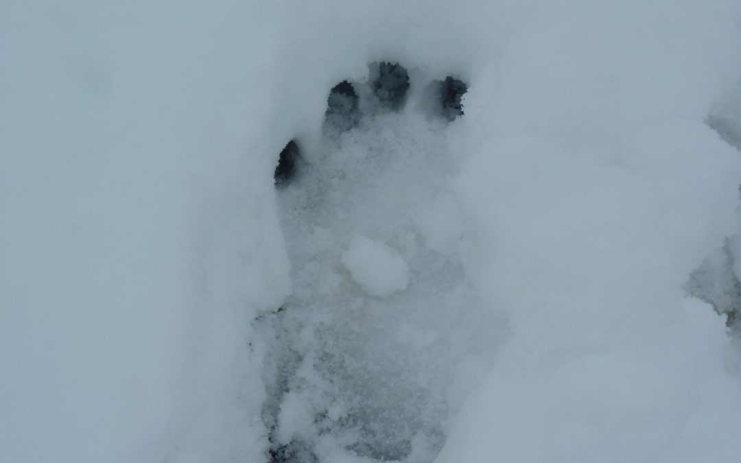 My sighting of Yeti footprints